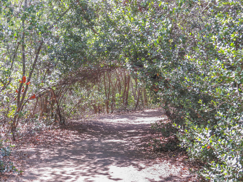 Natural gate at El Dorado Park. El Dorado East Regional Park, Long Beach, CA. USA stock image