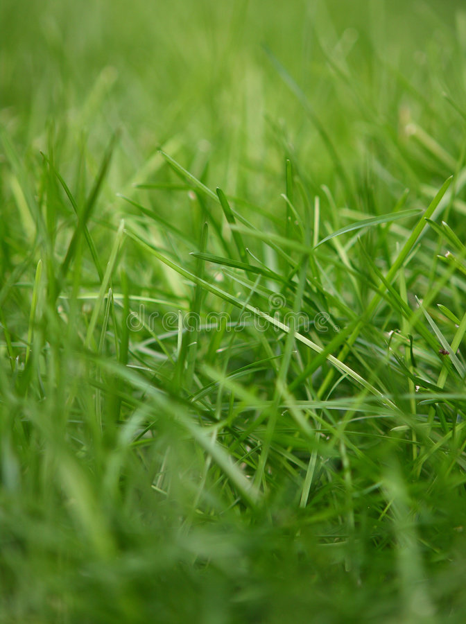 Download Natural grass stock image. Image of grass, growing, ecology - 6309471