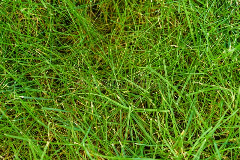 Natural grass texture pattern background golf course turf from top view with authentic grassy lawn for environmental backdrop stock image