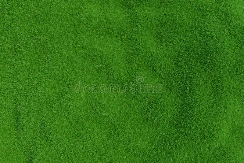 Download Natural Grass Texture Pattern Background Top View Grassy Lawn For Environmental Backdrop 3d