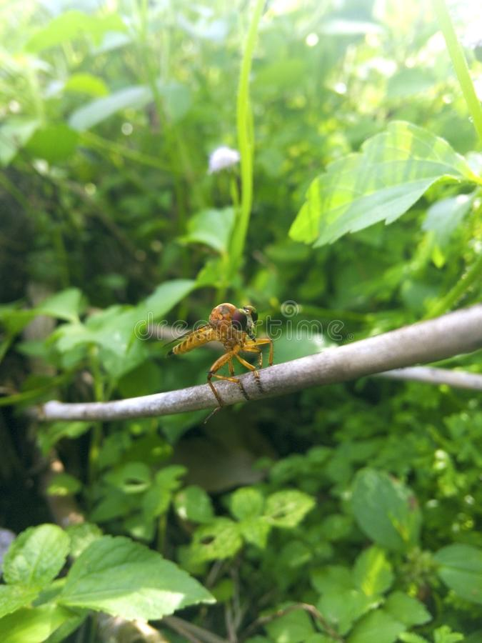 Natural green background and copy space. A brown dragonfly is on. Branch of tree in palm oil plantation stock images