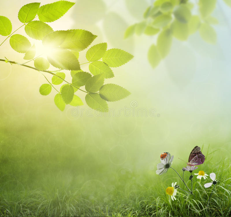 Natural green background royalty free stock images