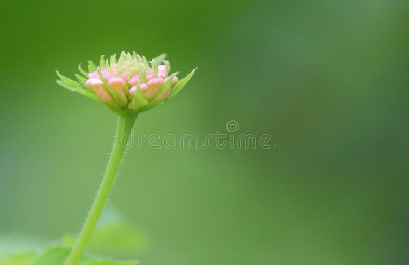 Natural green background and wild flowers and leaves stock images