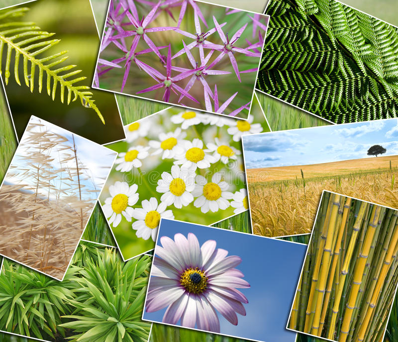 Natural Green Environment Plants Field Flowers Montage stock photography