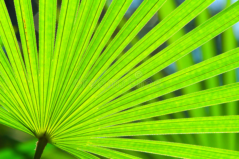 Natural Green Fan stock images