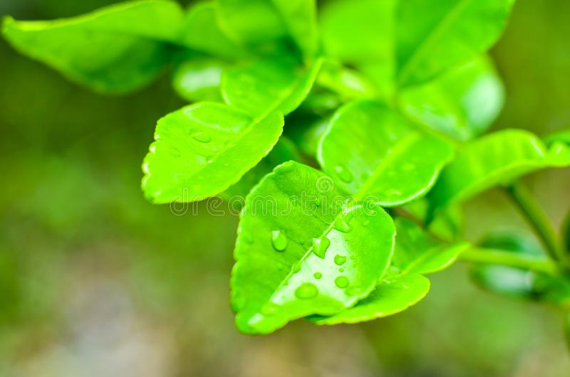 Natural green fresh stock image