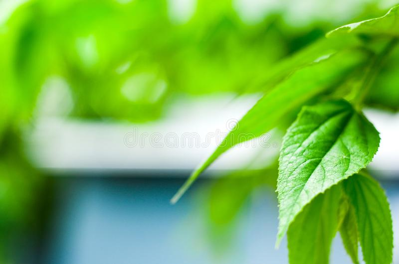 Natural green fresh royalty free stock photography