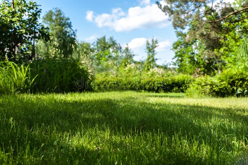 Natural green garden background with focused grass on front and blurred shrubs and trees on the back, under blue sky with cute royalty free stock images