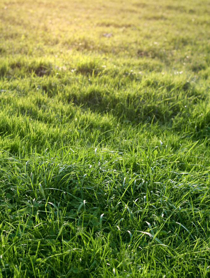 Download Natural green grass stock photo. Image of land, ecology - 26288698