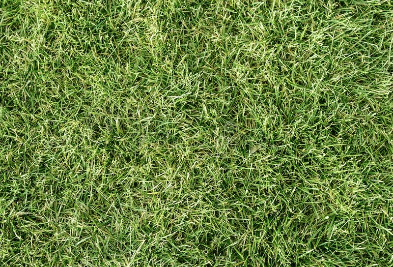Natural Green Grass background. Top view of natural Green Grass background stock photography