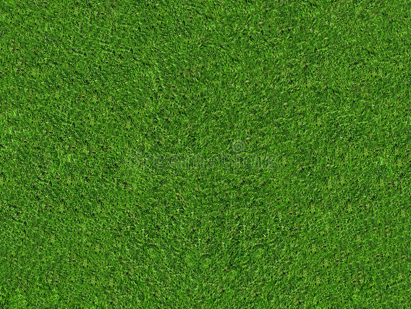 Natural green grass field stock images