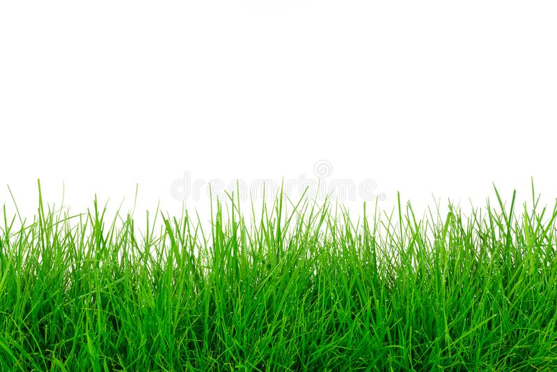 Green grass template stock photo. Image of grass, environment ...