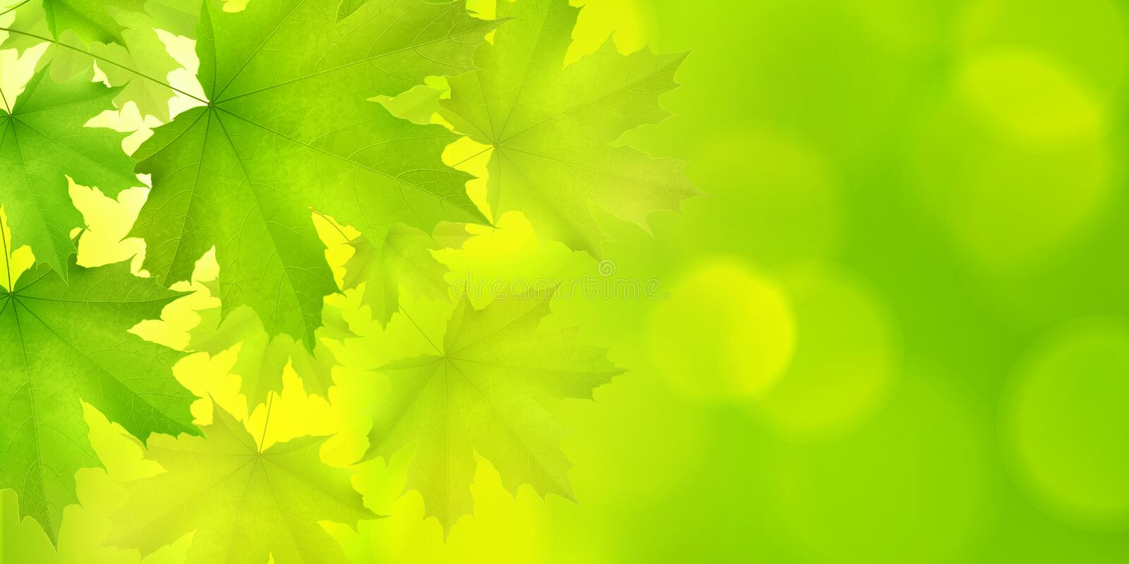 Natural green horizontal rectangular background with maple leaves and tree branches. Vector summer spring background stock illustration