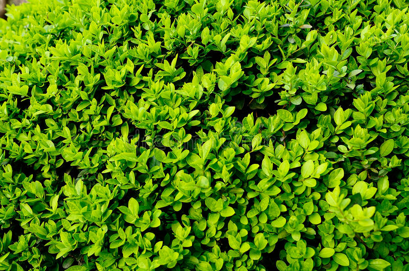 Natural green leaf texture royalty free stock photography