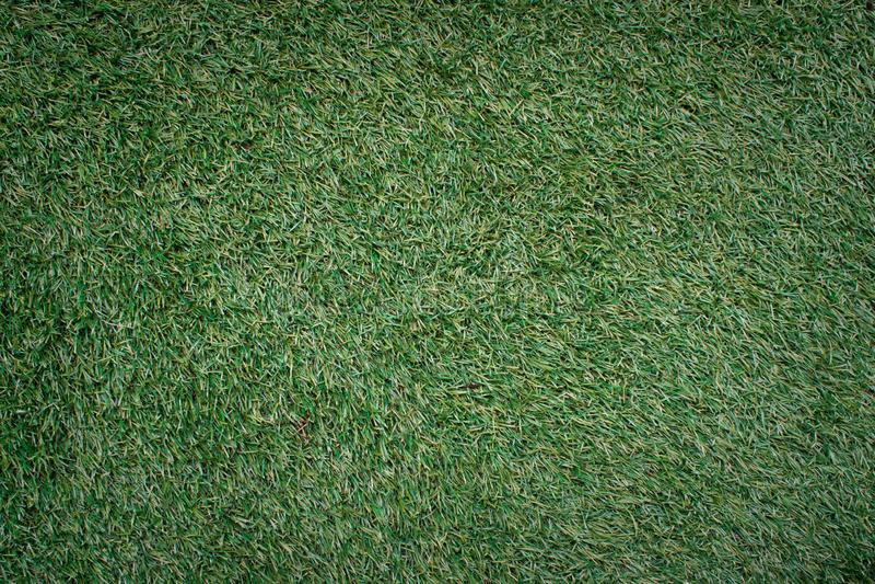 Natural green manila grass texture background. Natural green manila grass texture wallpaper background stock photo