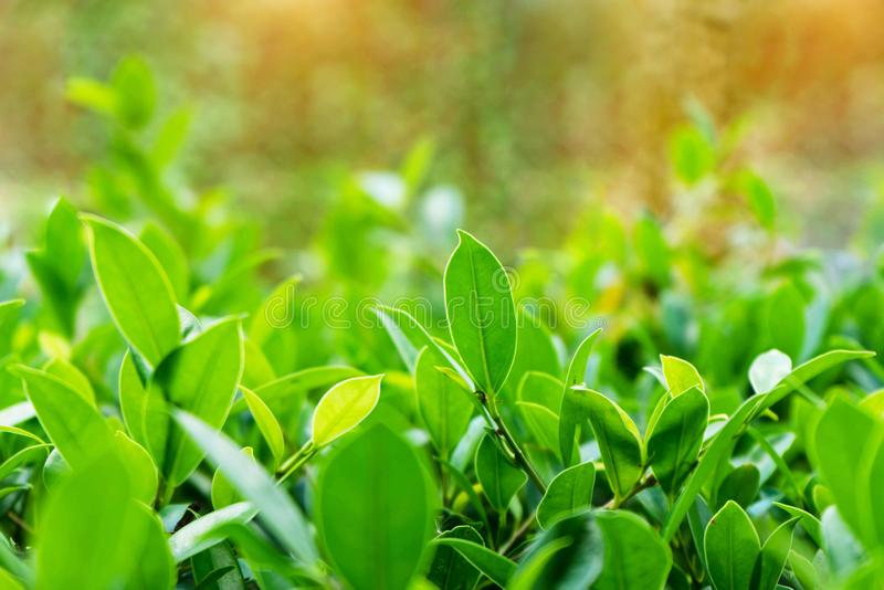 Natural green plants landscape using as a background royalty free stock photos