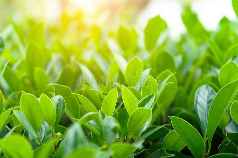 Natural green plants landscape using as a background royalty free stock image