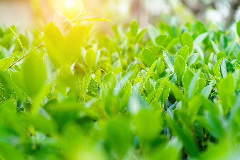 Natural green plants landscape using as a background royalty free stock photography