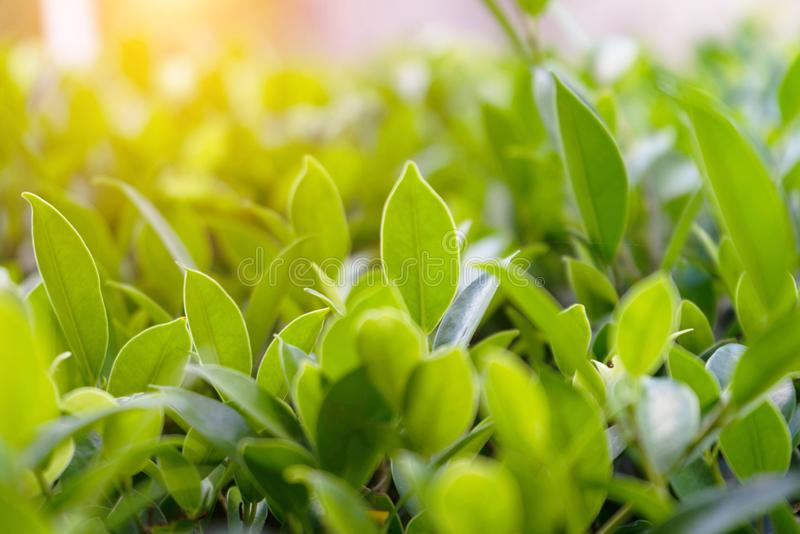 Natural green plants landscape using as a background royalty free stock images