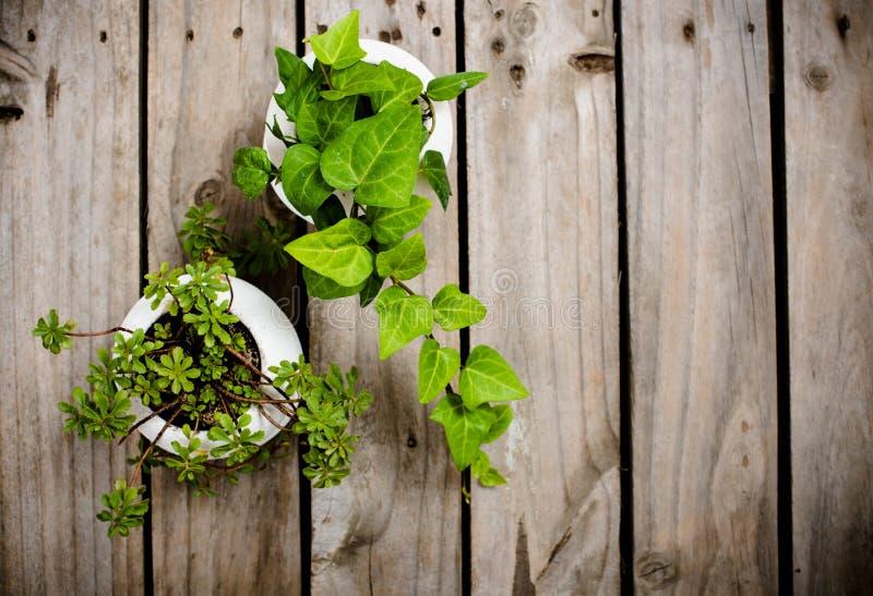 Natural green plants on an old vintage wooden board fotografia stock
