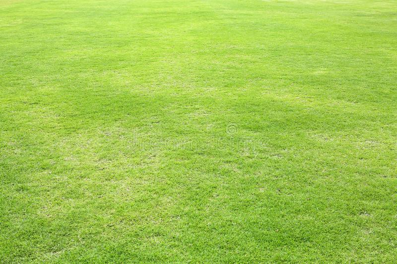 Natural green trimmed grass field background for sports.  stock images