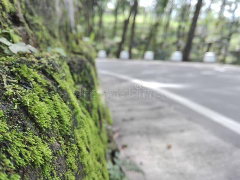 A natural green vision real image. Srilankan natural green vision ,Near a wet zone, cool zone royalty free stock photo