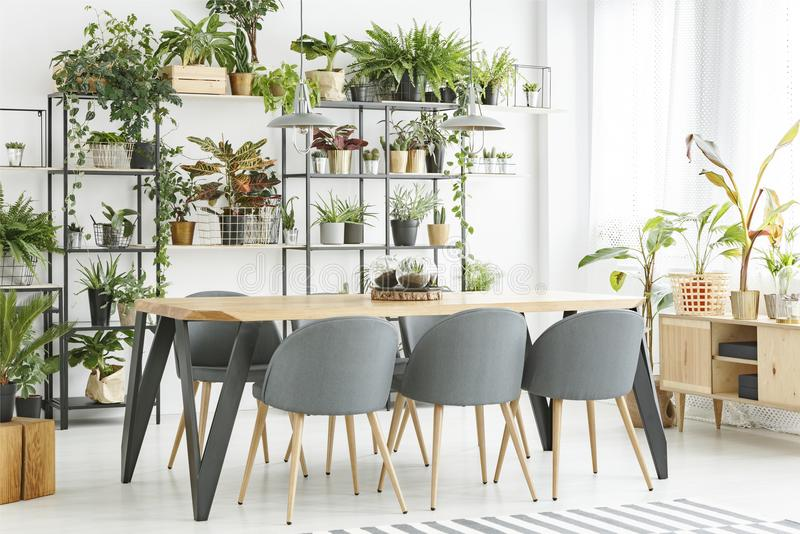 Natural grey dining room interior royalty free stock images