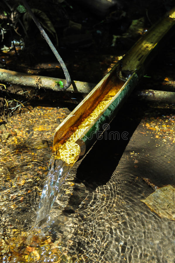 Natural gullet from bamboo stock photo