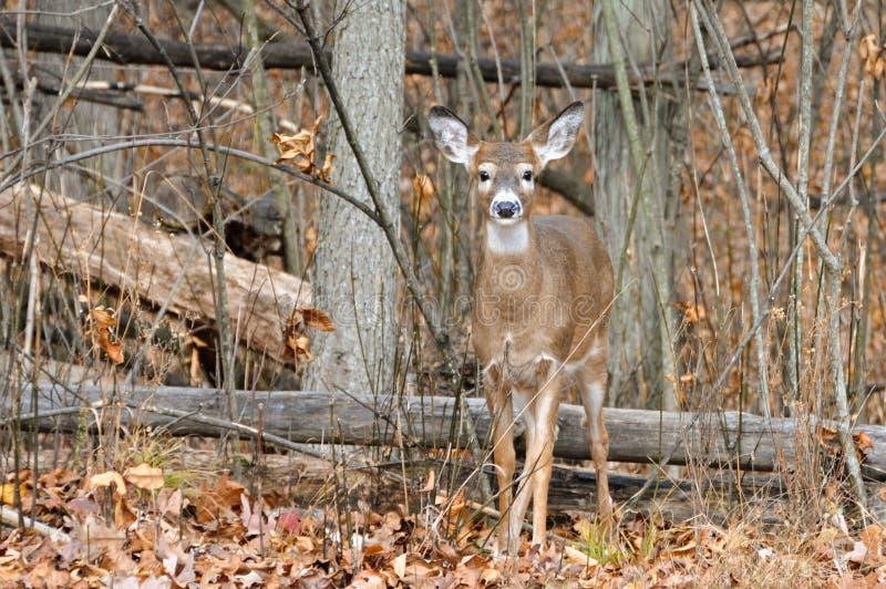 Natural Habitat Stock Photos