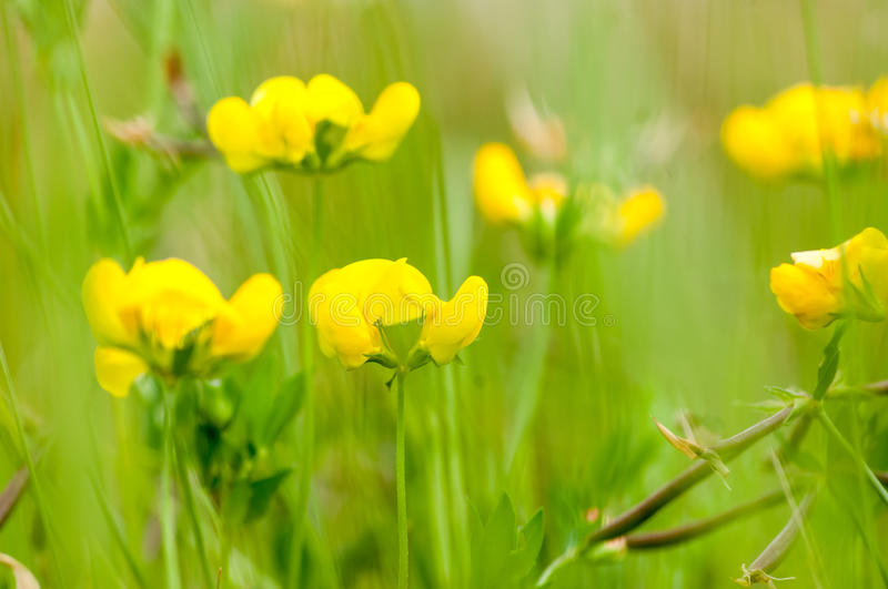Natural habitats wild flower meadow. In summer sun stock image