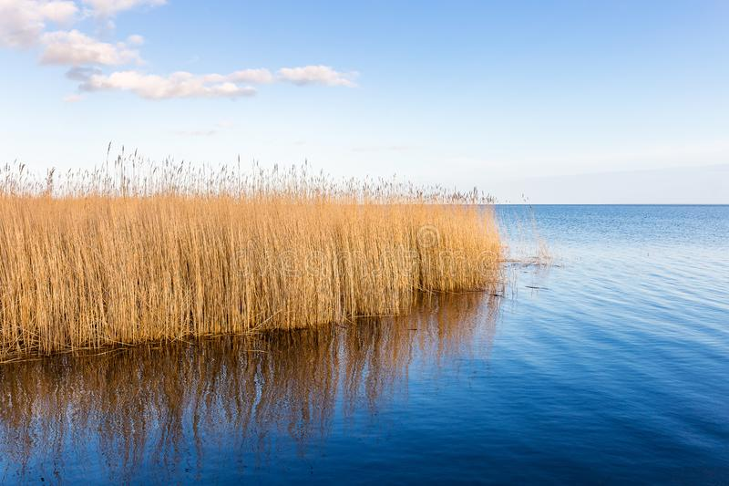 Natural harbor Stolpe on Usedom. The natural harbor of Stolpe on the island Usedom in the baltic sea royalty free stock photos