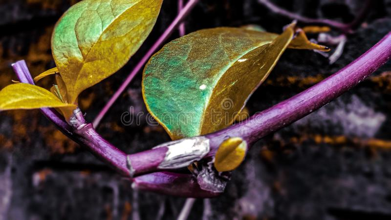 Natural healthy for colorful leaves with dark background stock photography