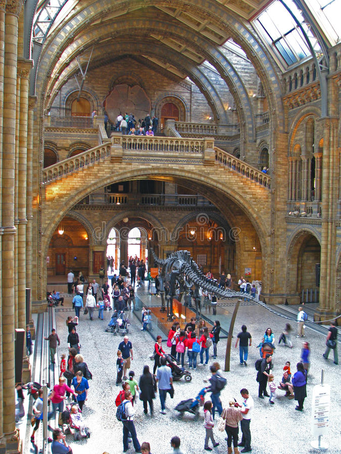 Download Natural History Museum editorial stock image. Image of sequoia - 13983049