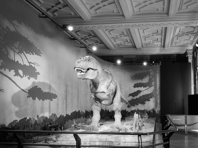 Download natural history museum in london black and white editorial stock photo image of white