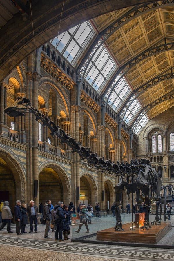 Natural History Museum - London - England stock photo