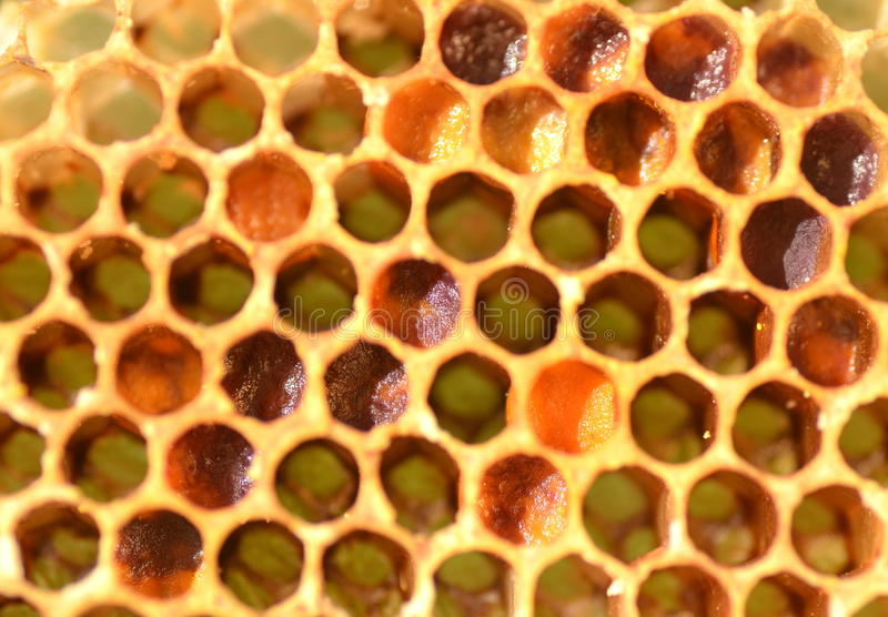 Natural honeycomb. Closeup of natural honeycomb for background stock images