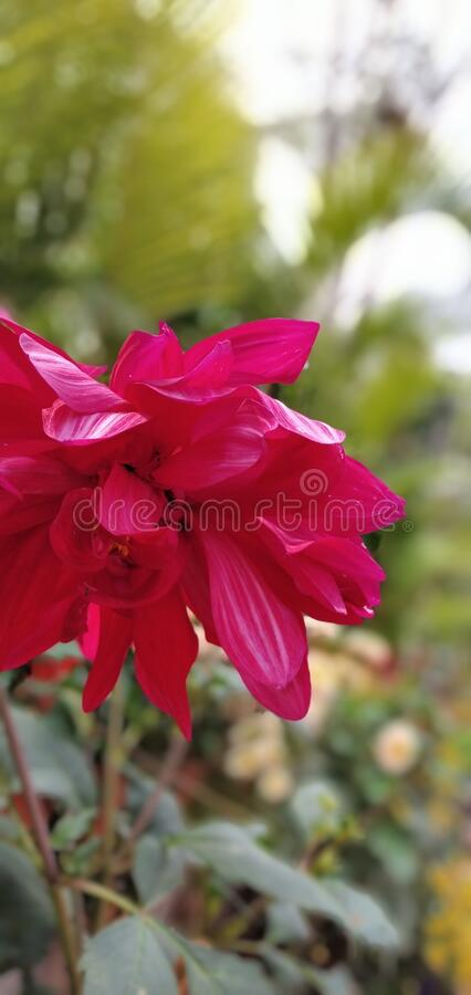 Natural image/image of natural flowers 2020. Natural image of flowers/beautiful flowers/garden flowers stock images