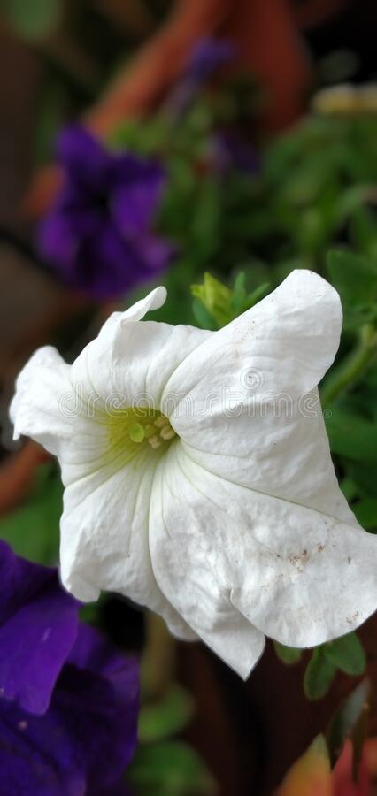Natural image/image of natural flowers 2020. Natural image of flowers/beautiful flowers/garden flowers stock photography