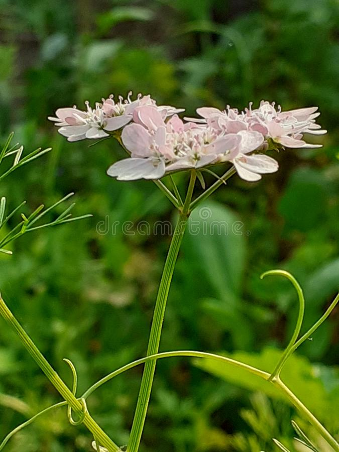 Natural Image Of Fowers Here. The natural scene here. Here is natural. You can feel , beautiful royalty free stock photos