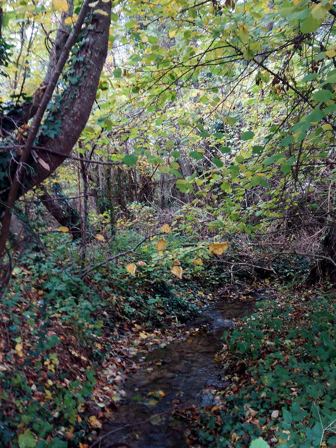 Natural jungle royalty free stock photo