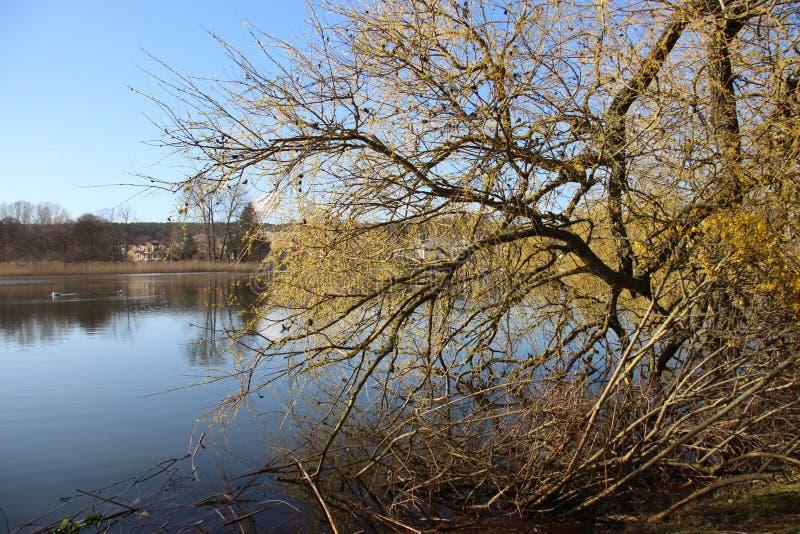 Lake View. Natural Lake View Whit Budding Leaves Dureng Springtime In Europe stock photography