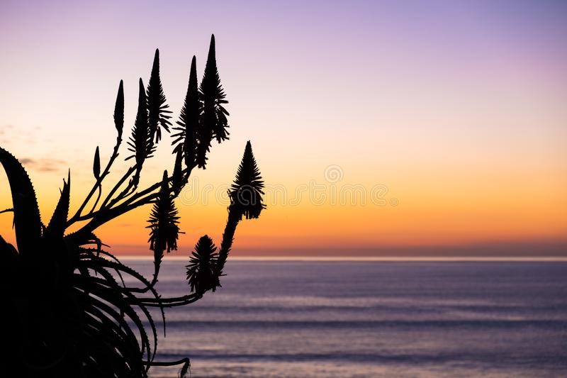 Simple and clean vibrant natural background image with copy space. Natural landscape image of clear colorful sunset sky with silhouette of tall Toetoe toitoi stock images
