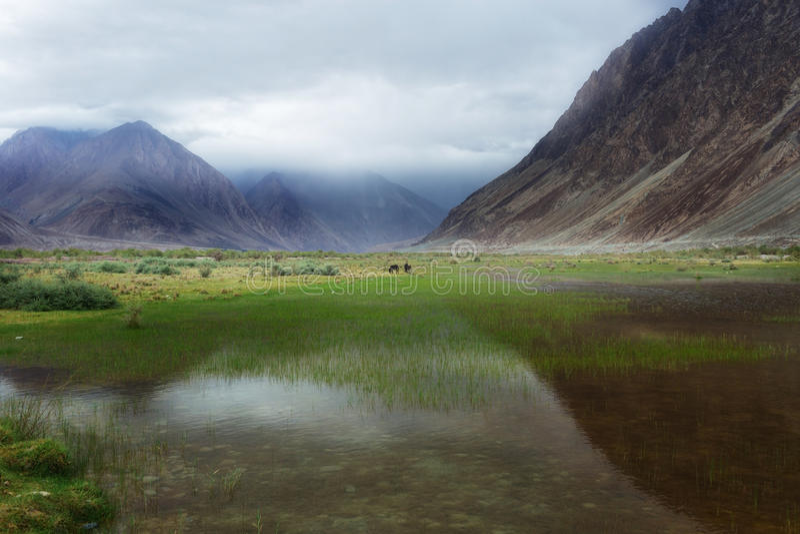 Natural landscape in Nubra valley stock photo
