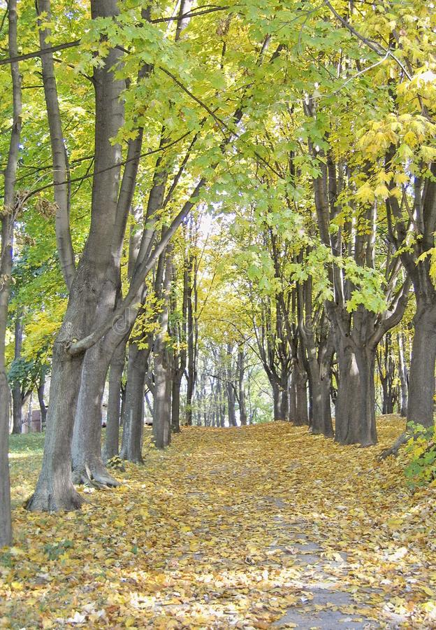 Natural landscape. Road in the autumn forest. stock photography