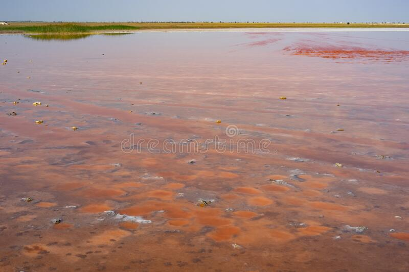 Natural landscape with a view of the pink salt lake. Evpatoria, Crimea royalty free stock image