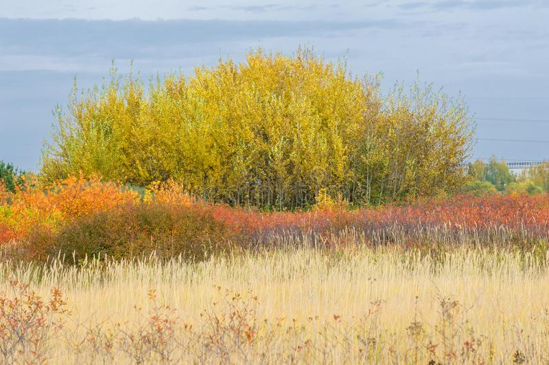 natural landscapes. Autumn landscape. Suburbs of the city, bright red yellow trees, bushes, old yellow black grass stock photo