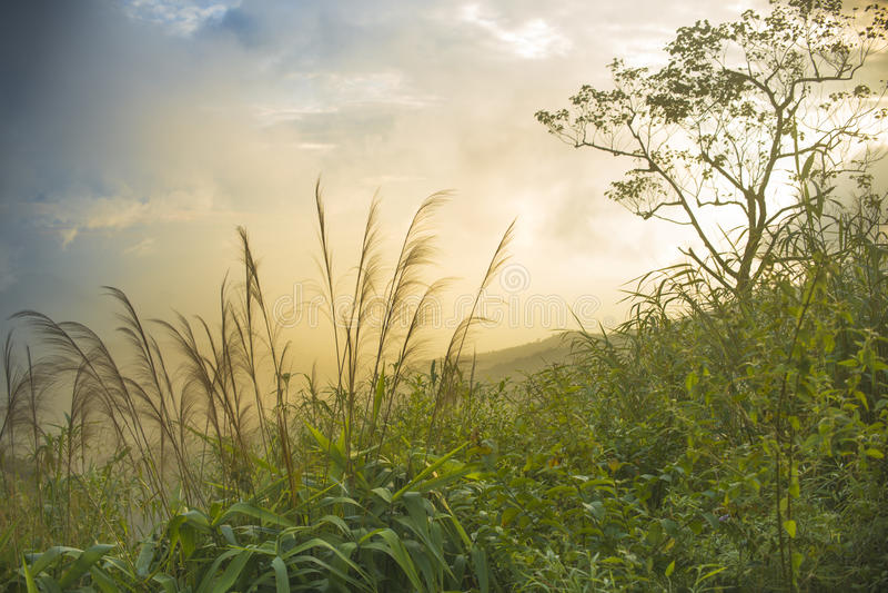 Natural landscapes stock photo