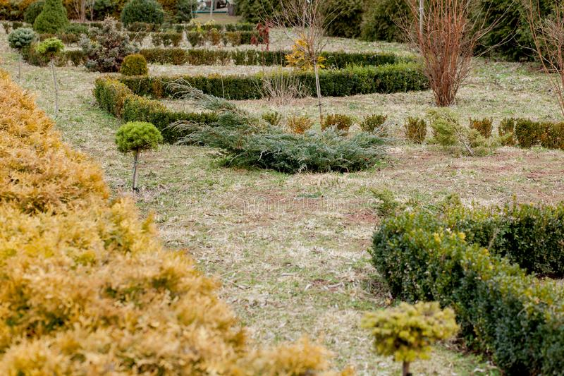 Natural landscaping panorama in home garden. Beautiful view of landscaped garden in backyard. Scenery of landscaping area in. Summer. Landscape design with royalty free stock photos