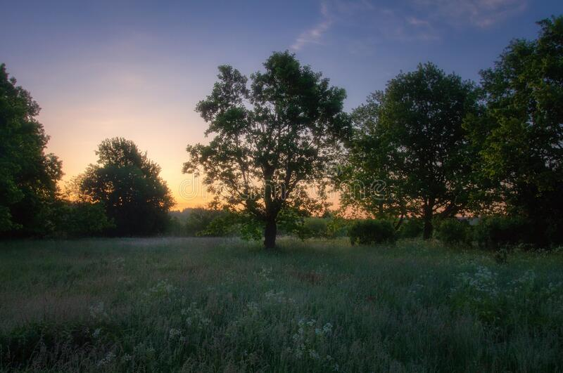 Summer sunrise on green meadow with trees stock image