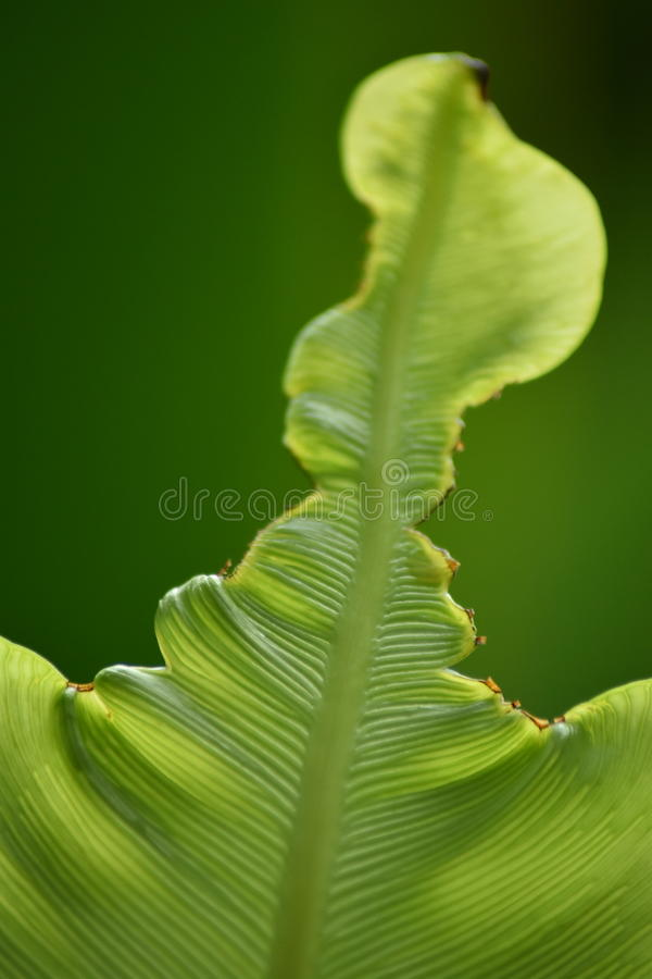 Natural leaf stock image